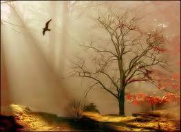 Folhas de outono 1