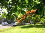 Rua Londrina - árvore e verde