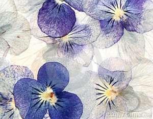 Canções da Alma 6 - flores-pastel-delicadas