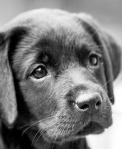 Cachorrinha 13A