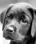 Cachorrinha 13AB