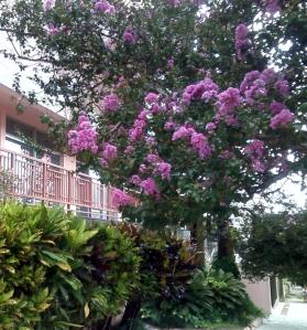 Flores nas ruas 4A