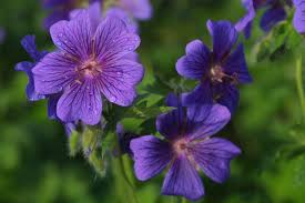 Flores tristes 8