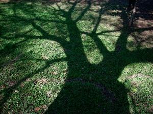 Sombra de árvore 2