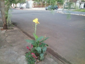 Flor na calçada 2