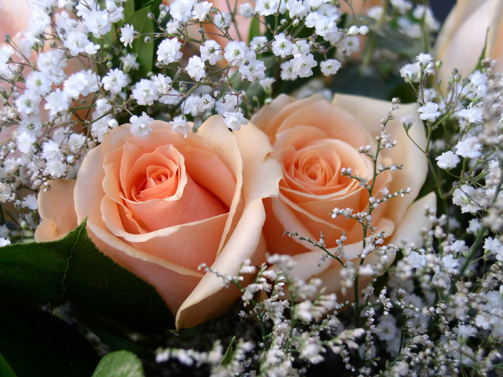 Delicadeza das rosas